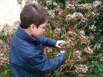 Comment tailler un hortensia?