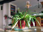 Plantes d'intérieur et lumière