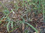 Des plantes contre l'érosion