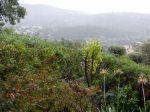 Le jardin après la pluie