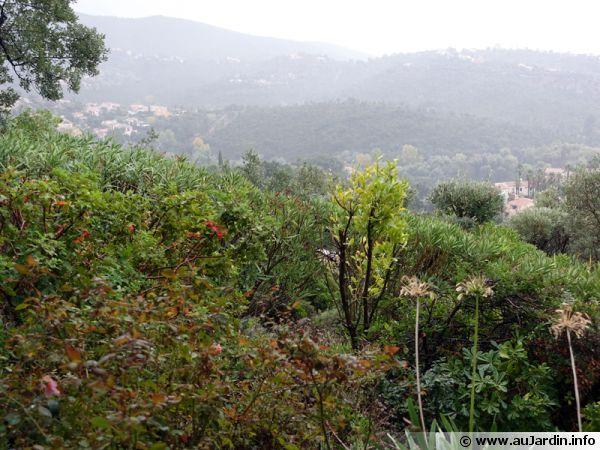 Un jardin dans le sud après la pluie