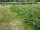 Une pelouse écologique