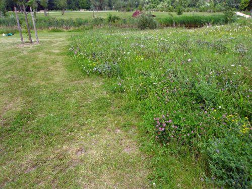 Une pelouse cologique for Recherche tonte pelouse