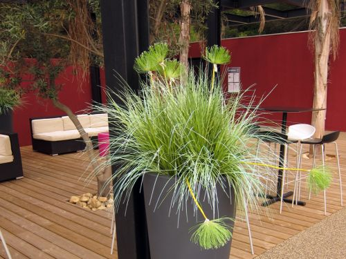 Maison et v randa for Bambou en interieur