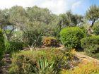 Les plantes adaptées au climat méditerranéen