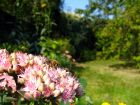 Les bases du jardinage naturel