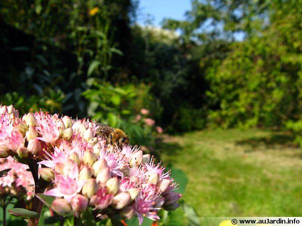 Un jardin naturel et sa biodiversit�