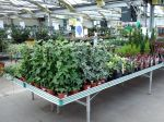 Gérer les plantes au retour de la jardinerie