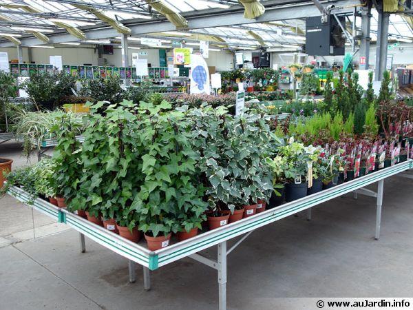 Étalages d'une jardinerie au printemps