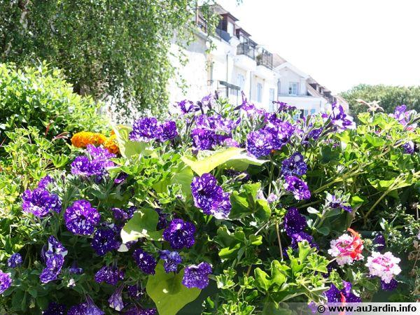 De l'engrais à libération lente pour une belle jardinière tout l'été