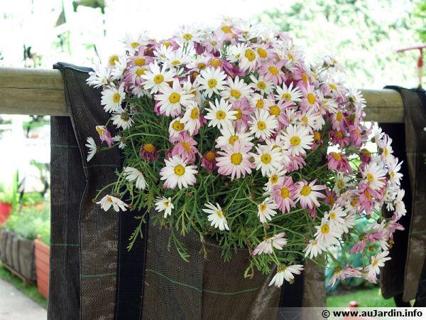 Une jardinière origine type sacoche en textile pour poser sur un rebord mais peut-être pas des plus pratiques au niveau entretien