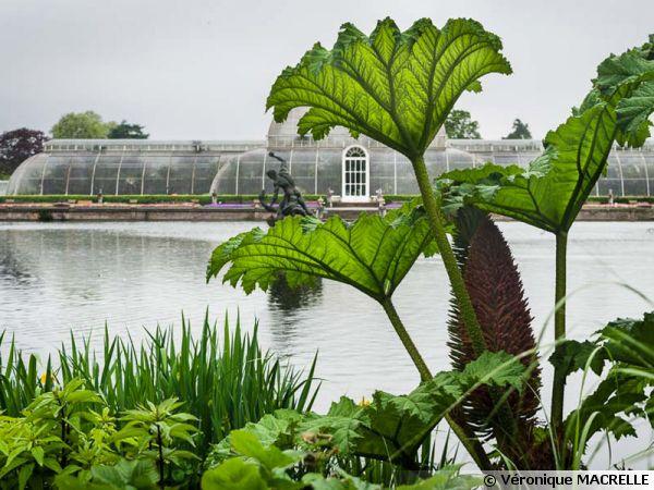 Le jardin botanique royal de Kew, la serre des palmiers
