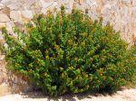 Des plantes qui résistent à la sécheresse