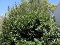Un arbre au balcon