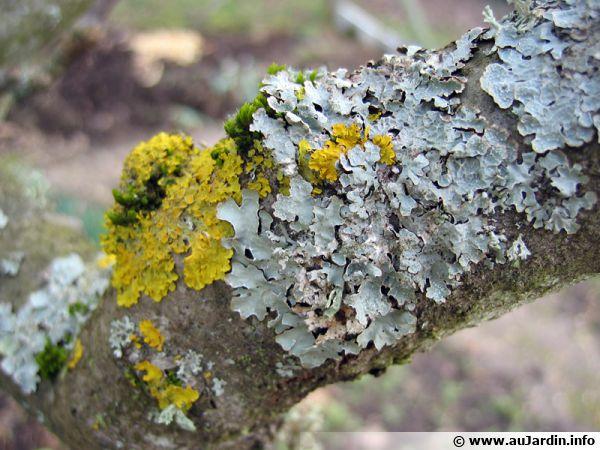 Le rajeunissement des arbres - Traitement arbres fruitiers ...
