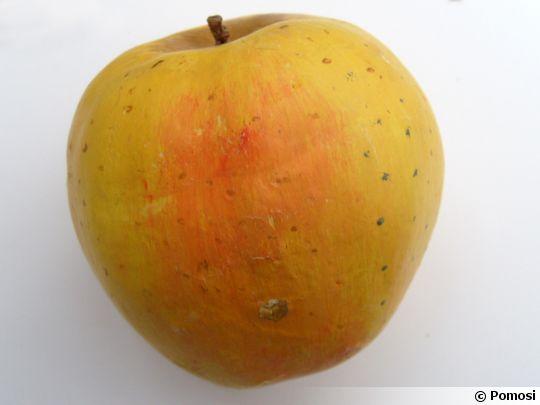 Pommes anciennes du nord de la france - Variete de pomme de terre ancienne ...