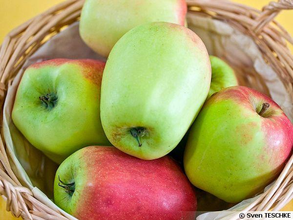 Pommes CLOCHE-GLOCKENAPFEL