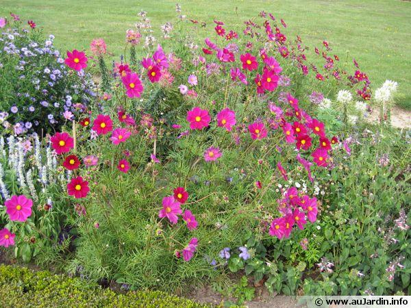 Calendrier des semis de plantes annuelles