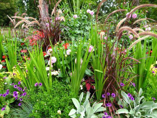 F vrier au jardin d 39 ornement for Au jardin conseils en jardinage