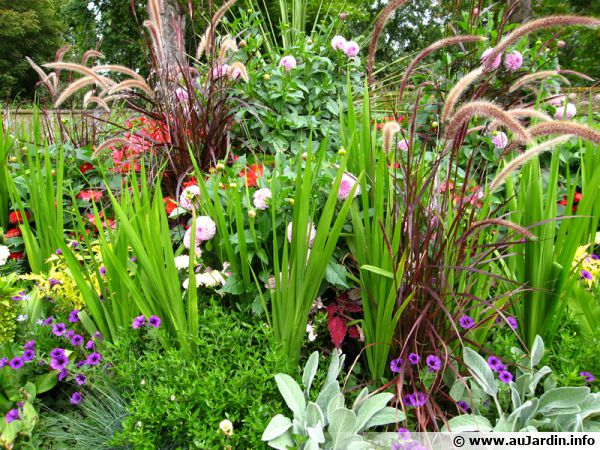 Avril au jardin d 39 ornement for Plantes ornement exterieur