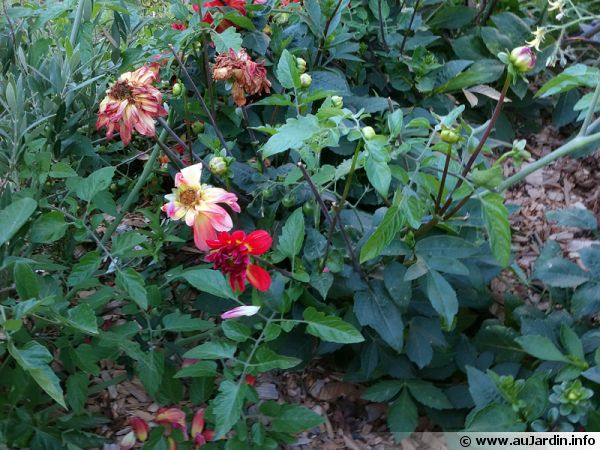 La rentr e au jardin for Au jardin info