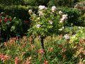 Comment associer les rosiers aux plantes vivaces?