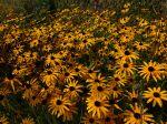 10 plantes pour massifs faciles à cultiver