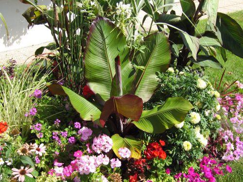 des plantes tropicales au jardin. Black Bedroom Furniture Sets. Home Design Ideas