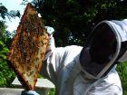 Le miel, merveille de la nature