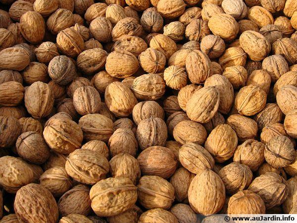 les noix en tous genres apportent du fer
