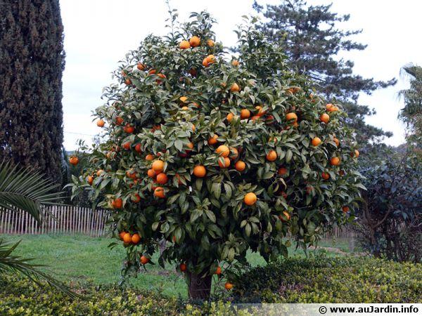 L'oranger représente une zone spécifique au climat doux propice aux agrumes