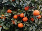 Les fruits et légumes riches en vitamine C