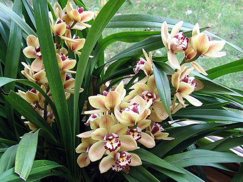 Où installer son orchidée ?