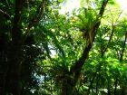 Le parc national de la Réunion