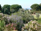 Parc de Saleccia, vallée des lauriers roses