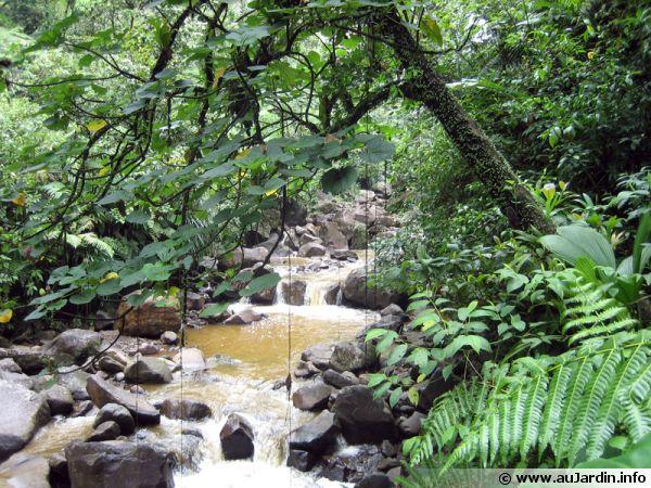 La for�t tropicale concentre une vaste diversit� de plantes