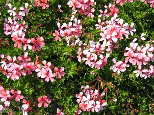 Acheter ses plantes au meilleur moment for Acheter plante