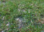 Apporter de l'engrais à la pelouse
