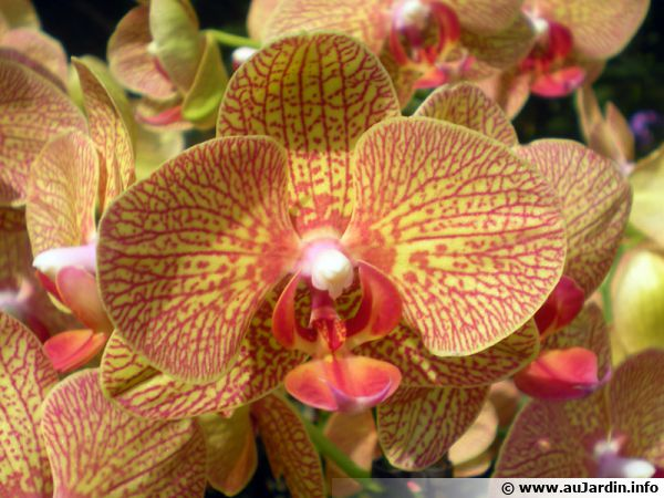 orchidee trackid=sp-006