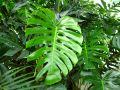 Les plantes dépolluantes d'intérieur