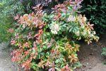 Quels arbustes pour border une terrasse?