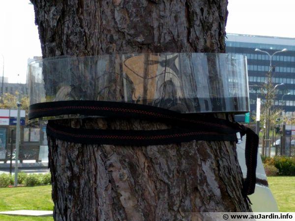 Un piège à chenilles processionnaires installé sur un pin dans un parc