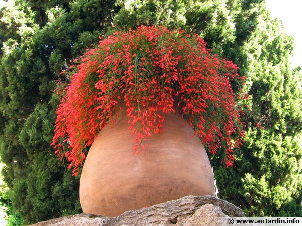 l'hivernage des plantes en pot