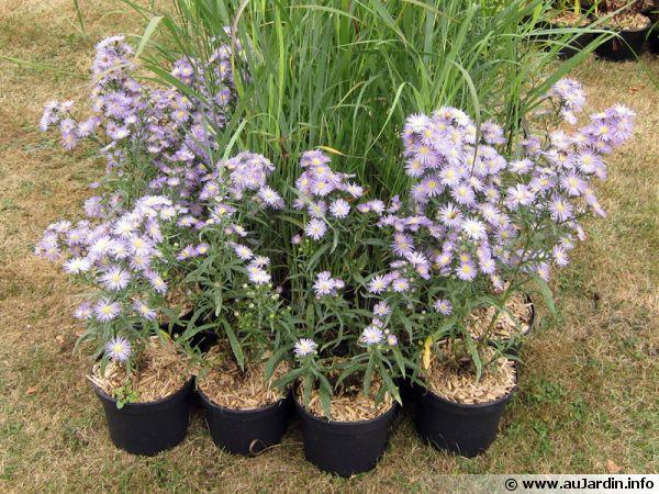 Plantes en conteneurs