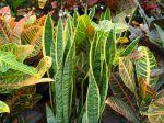 Des plantes plein la maison et la véranda !