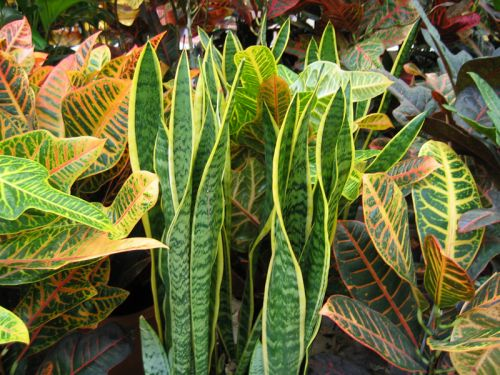 Plantes d 39 int rieur for Maladie plante verte interieur