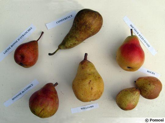 Variétés de poires commerciales