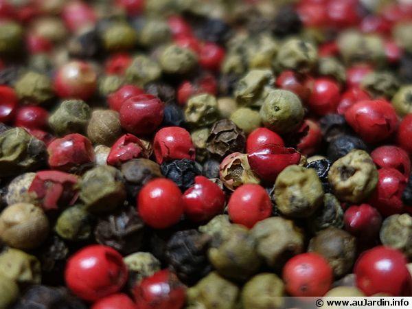 Mélange de poivre 5 baies composé de poivre vert, blanc et noir, de baies roses et de coriandre