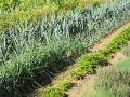 Quels légumes semer en automne ?