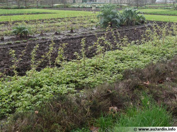 Que semer au potager en mars - Que planter en mars au potager ...